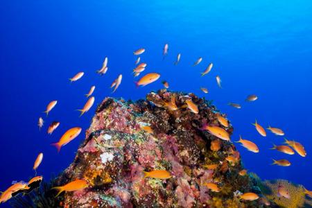 蘭嶼海中生態